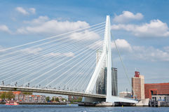 Erasmus bridge in Rotterdam and business buildings Stock Photography