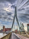 Erasmus Bridge - Rotterdam Stock Image