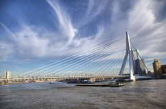 Erasmus Bridge in Rotterdam on the Nieuve-Maas River, Rotterdam Royalty Free Stock Photo