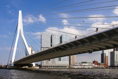 Erasmus bridge, Rotterdam Royalty Free Stock Image