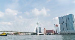 Erasmus Cable Stay Bridge Rotterdam arkivfoton