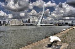 Free Erasmusbridge Rotterdam Royalty Free Stock Image - 16133446