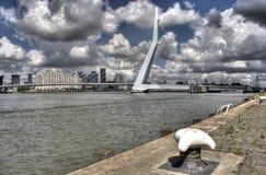 Free Erasmusbridge Rotterdam Royalty Free Stock Photography - 16544297