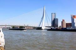Erasmusbrug天鹅在鹿特丹,荷兰 免版税库存图片