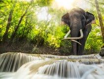 Erawan vattenfall med ett elefhant Royaltyfria Bilder