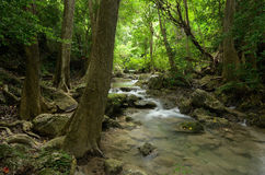 Erawan waterfalls. Canel little in the big forest Royalty Free Stock Images
