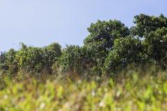 Erba, alberi e cielo Fotografie Stock Libere da Diritti