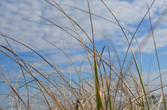 Erba alla spiaggia Fotografia Stock Libera da Diritti