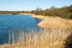 Erba alta asciutta sulla banca di un lago in primavera in anticipo il giorno soleggiato Fotografia Stock