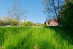 Erba alta con gli alberi e le case Fotografie Stock