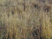 Erba alta del campo con il recinto Fotografia Stock