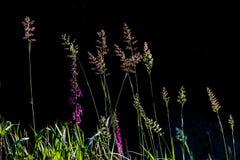 Erba alta del campo in pieno dei semi e dei fiori Fotografie Stock Libere da Diritti