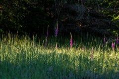 Erba alta del campo in pieno dei semi e dei fiori Fotografia Stock Libera da Diritti