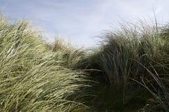 Erba alta della duna di kerry Fotografia Stock Libera da Diritti