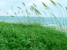 Erba alta laterale della spiaggia Fotografia Stock