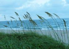 Erba alta laterale della spiaggia Fotografie Stock Libere da Diritti