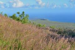 Erba alta su un vecchio campo di flusso della lava dall'oceano nel parco nazionale dei vulcani, grande isola delle Hawai Fotografia Stock Libera da Diritti