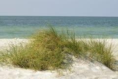 Erba alta su una duna di sabbia Fotografia Stock Libera da Diritti