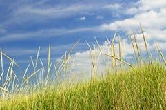 Erba alta sulle dune di sabbia Fotografie Stock Libere da Diritti