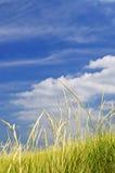 Erba alta sulle dune di sabbia Fotografia Stock Libera da Diritti