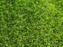 Erba artificiale con colore verde fotografie stock libere da diritti
