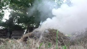 Erba asciutta bruciante in un fuoco nel giardino stock footage