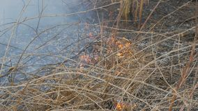 Erba asciutta e rami brucianti vicini sulla vista Fuoco selvaggio pericoloso nella natura stock footage