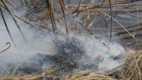 Erba asciutta e rami brucianti vicini sulla vista Fuoco selvaggio pericoloso nella natura archivi video