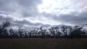 Erba asciutta ed alberi nella steppa in molla in anticipo Assomiglia all'autunno L'Asia, Russia Fotografia Stock