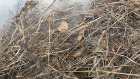 Erba asciutta o fieno bruciante che stanno fumando Il problema dei fuochi e protezione della natura stock footage