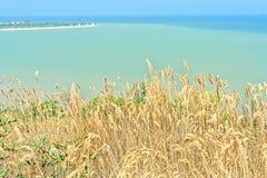 Erba asciutta sulla riva del mare del turchese, primo piano Immagini Stock