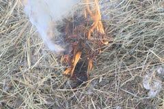 erba asciutta vicino alla foresta che le foreste stanno bruciando Rischio d'incendio abbia tonalit? fotografia stock