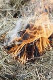 erba asciutta vicino alla foresta che le foreste stanno bruciando Rischio d'incendio abbia tonalit? immagine stock