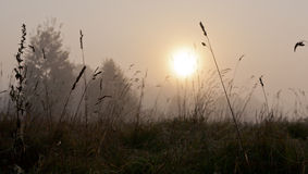 Erba autunnale nella mattina nebbiosa con la sfera del sole fotografie stock