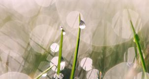 Erba bagnata con le gocce di pioggia