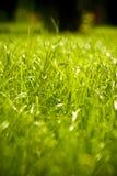 Erba bagnata verde Fotografia Stock