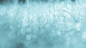 Erba blu con le gocce Fotografia Stock
