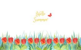Erba blu e verde con i tulipani luminosi Piante isolate su priorit? bassa bianca Ciao estate fotografia stock