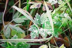 Erba in brina, modellata e nevicata, inverno fotografie stock