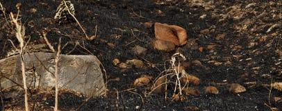 Erba bruciacchiata o erba bruciata Fotografia Stock Libera da Diritti