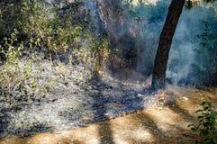 Erba bruciata alle ceneri con l'incendio violento Fotografie Stock Libere da Diritti