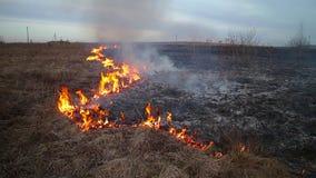 Erba Burning stock footage