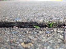 Erba che cresce attraverso le crepe sul percorso del marciapiede Fotografia Stock Libera da Diritti