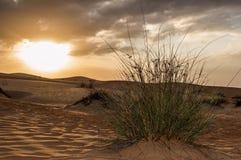 Erba che cresce davanti all'alba del deserto Fotografia Stock