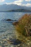 Erba che cresce sulla riva del lago Manapouri Fotografie Stock