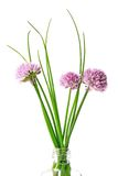 Erba cipollina (allium schoenoprasum) Immagine Stock