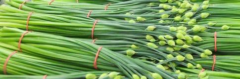 Erba cipollina cinese dei pacchi aka come erba cipollina di aglio con il germoglio di fiori immagine stock