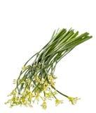 Erba cipollina di aglio Fotografia Stock