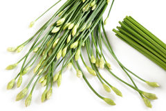 Erba cipollina di aglio su bianco Immagini Stock Libere da Diritti