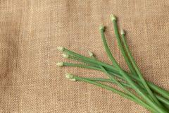 Erba cipollina di aglio verde Immagini Stock Libere da Diritti